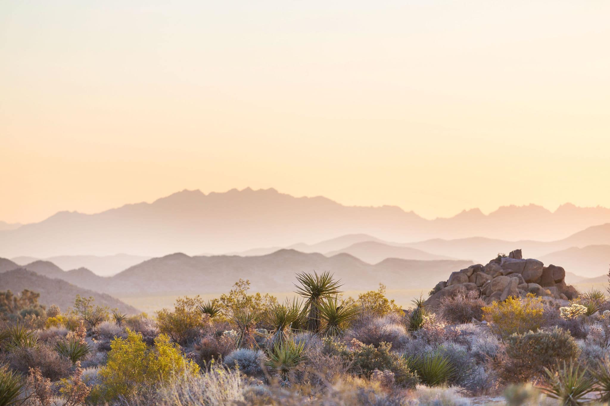 Arizona desert landscapes at sunrise, USA